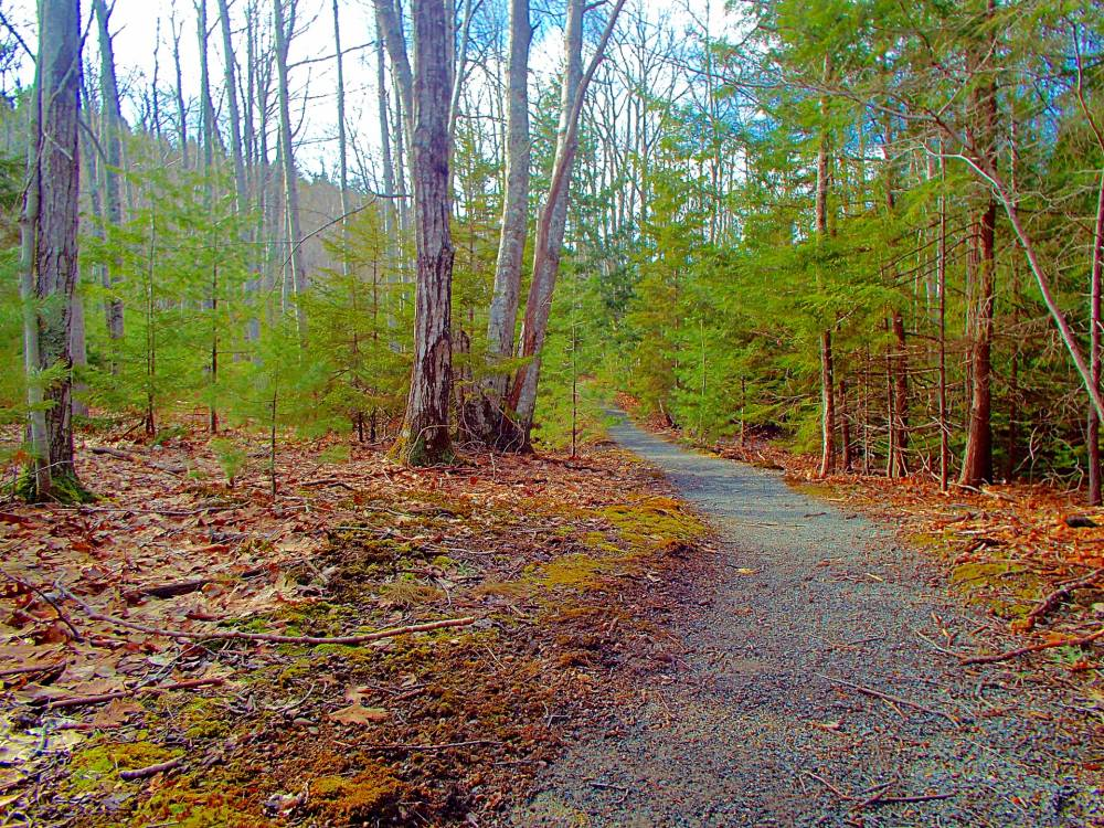 Hiking Trail in Abbot Maine